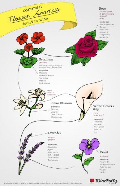 common-flower-aromas-in-wine.jpg