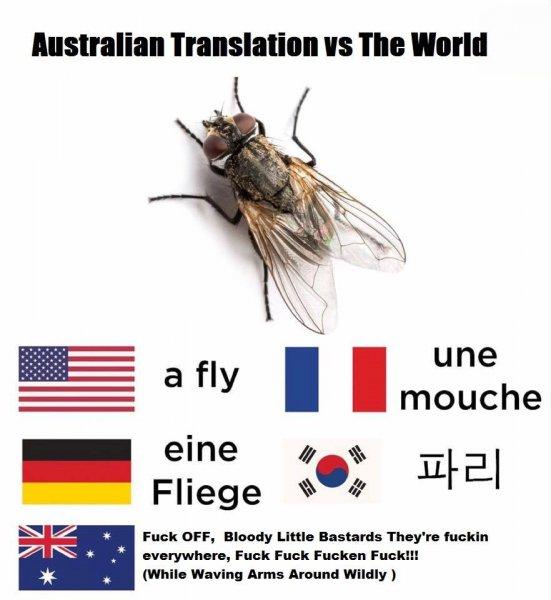 fly translantions.jpg